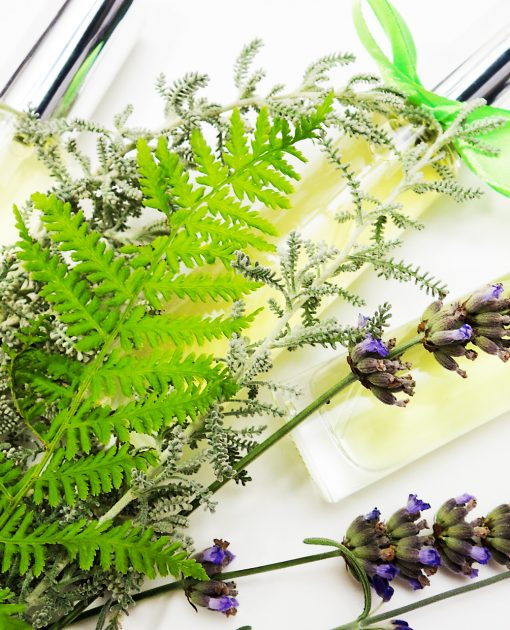 Ferns and Forest Perfume Samples Pack