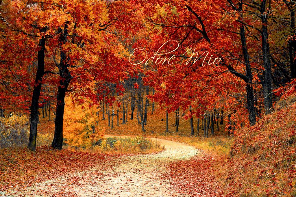 Autumn Perfume Odore WEB