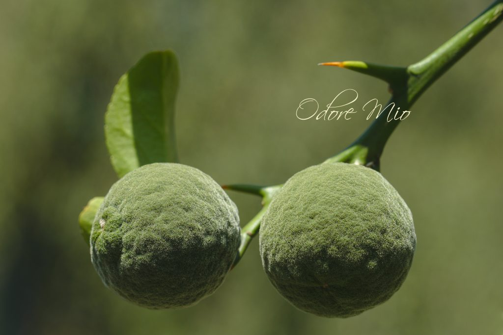 Odore Mio Yuzu Fruit Perfume