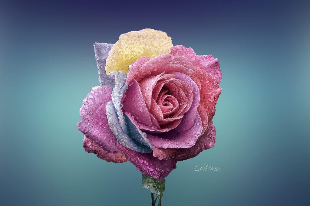 Odore Mio Silver Rose Perfume