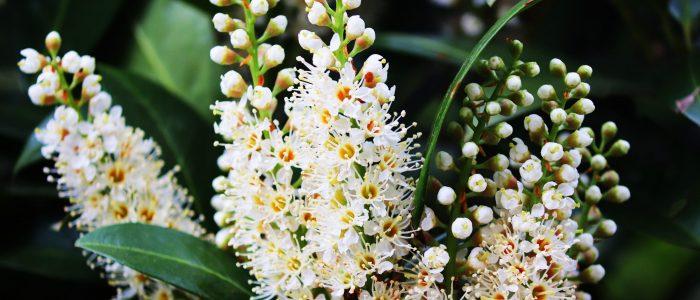 Odore Mio Bay Blossom